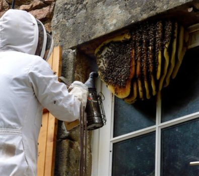 What are the benefits of hiring bee removal service provider